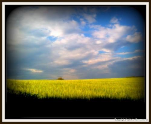 photo, noir, blanc, ciel, nuages, ciel, luminosité