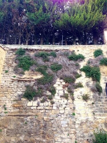 photos,château fort,édifice,ruelles, tourisme, drôme,pavés,murs,fortification,privé,jardins,moyen-âge,pierre,donjon,tour,étoile sur rhône