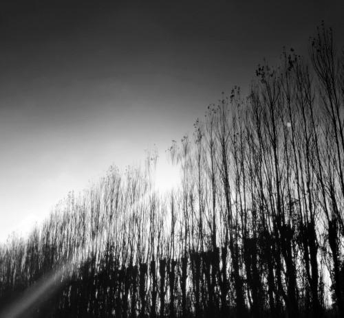 photo,art,noir et blanc,cyprès,soleil,rayon,rangée,allée,halo,ciel,drôme