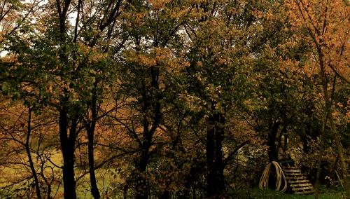 photo, automne, nature, couleurs, arbres, feuilles,  campagne, saison, Drôme