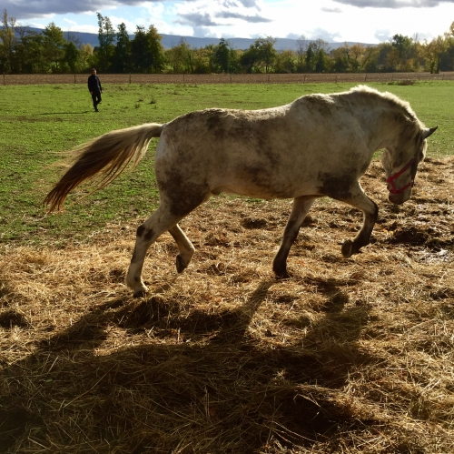 Gemini, Bobine, chevaux, Tarn, Paysage, plaine, campagne, automne