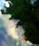 photo,balade,nature,vie,paysage,soleil