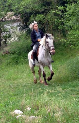 photo, cheval, gemini, campagne, drôme, nature, ballade