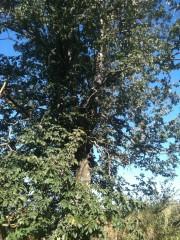 arbre,vie,plante,nature, beauté,