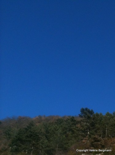 photo, art, ciel, arbre, couleur, azur, pins