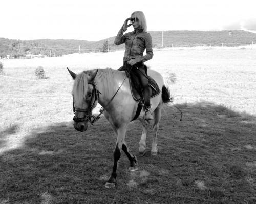 gemini,cheval,équitation,pré,nature,drôme,campagne