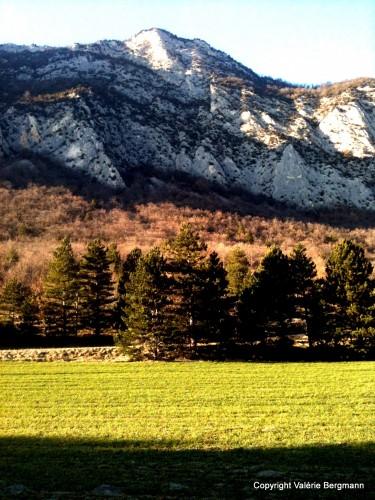 photo,nature,paysage,forêt,champs,montagne,drôme,saou