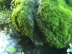 photos,nature,jardin,cascade,aujourd'hui