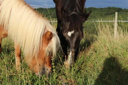 cheval, Cache-Cache, Hippos, Bobine, nature, drôme
