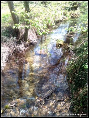photos, rivières,Saou, ,nature, paysage, lierre, ondes, lumière