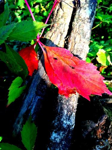 photos, art, couleurs, feuilles, automne,