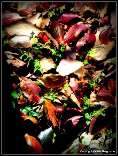 photos, feuilles, couleurs, nature, lumière