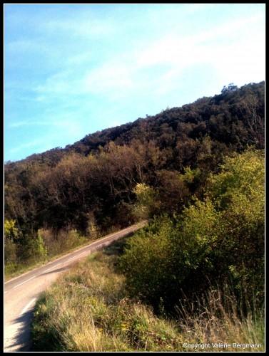 photos, fleurs, nature, forêt, route, lumière, couleurs,