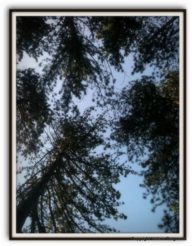 photo, Jésus, croix, ciel, Drôme, forêt, Saou