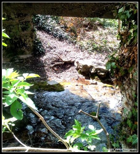 photos, rivières,nature, paysage, lierre, ondes, lumière