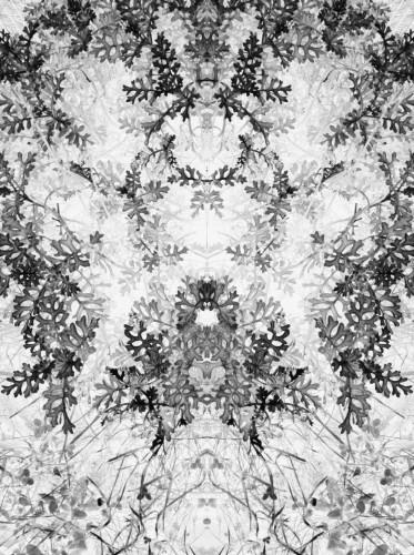 photo, art, numérique, image, illustration, noir et blanc, transformation, vision, dentelle, tapisserie, motifs
