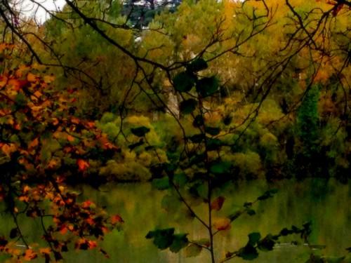 photos,automne, art, parc, paysage, nature, couleurs, saisons,estampe,canard, branchages, automne, tourisme, drôme, verdure, lac, Romans, tourisme