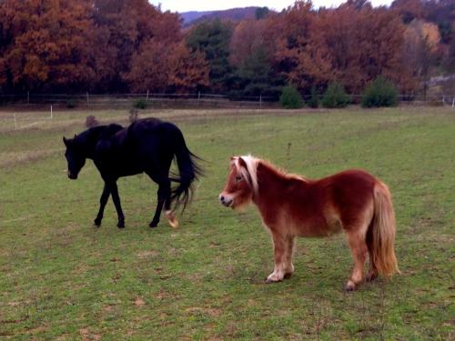 photos, chevaux, hippos, gemini, bobine, amour,Drôme, nature, animaux, campagne, pré, automne