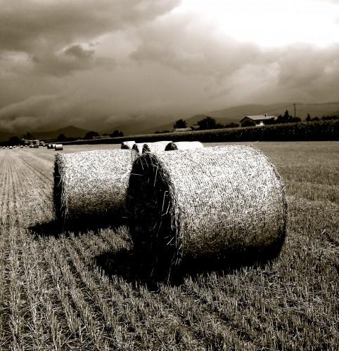 moissons,blés,foin,rouleaux,nature,champ,paille,campagne,couleurs,ciel,nuages,drôme