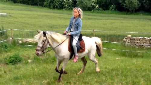 photos, cheval, gemini, nature, trot, campagne, loisir,équitation