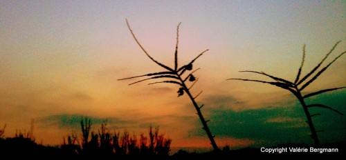 photo, ciel, couleurs, nuances, peinture