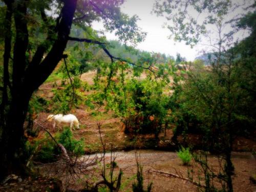 photos, Vercors, art, campagne, paysages, Drôme,nature, cartes, postales, tourisme, couleurs, lumières, foin, chevaux, terreluminosités, perspective,