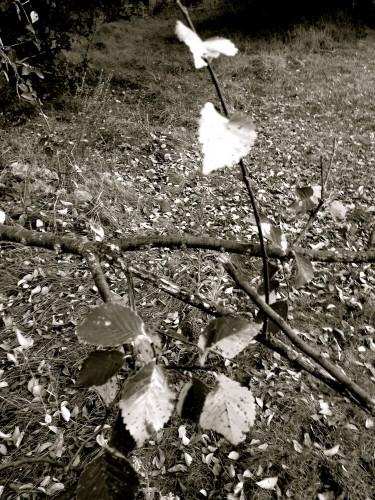 photo, nature, feuilles, campagne,  coeur, prémisse, automne