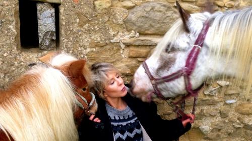 photos, chevaux, amours, apposa, shetland,bobine, gemini, Drôme, hiver, poses