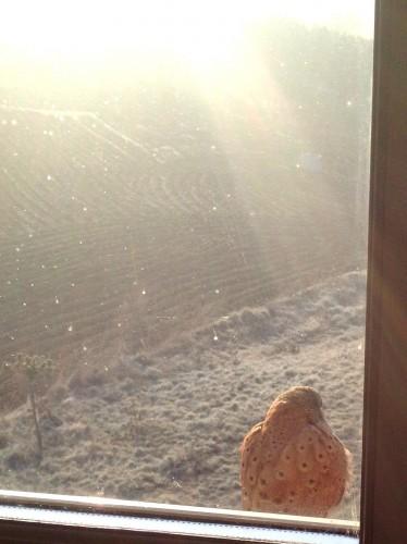 chouette, animal,oiseau, beauté, fenêtre, maison