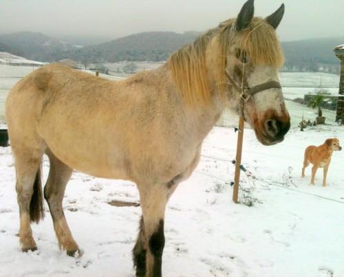 photo, bobine, gemini, neige, pureté, paysage
