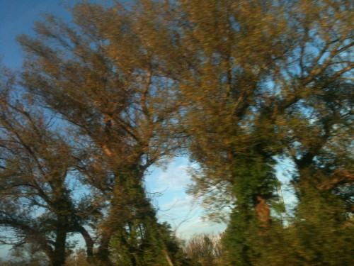 dieu,beauté,nature,terre,ciel,vignes,ombres