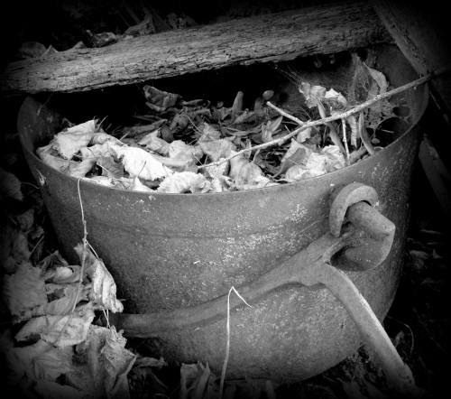 photographies, noir et blanc, vue, ancien, charrette, chaudron, feuille