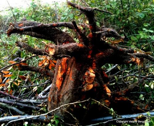 photo, nature, bois, insolite, tronc, feu, lumières