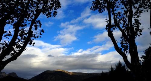 photos,terre,paysage,nature,ombres,reflets,horizon,prairies,prés,verdure,arbres,herbe,saule pleureur,drôme,tourisme,campagne,vache,moutons