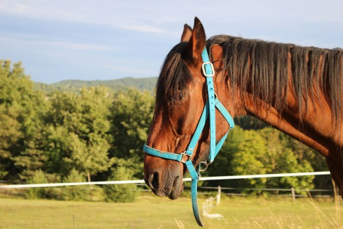 cheval,ainé, animaux, Cache-Cache, Hippos, Bobine, nature, drôme