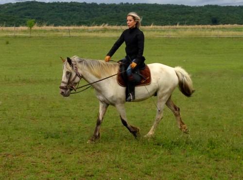 cheval,animal,pas,trot,gemini,équitation,champ,verdure,amour,drôme