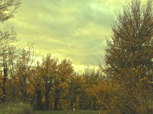 photos, dessins, peinture, couleurs, campagne, arbres, Drôme, teintes, éclairage, lumière