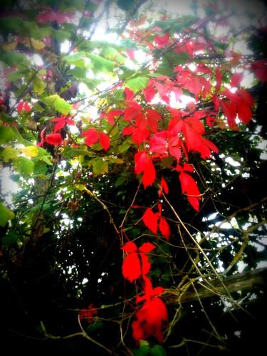 photo, feuilles, baies, couleurs, branches, fleurs, couleurs, les chanaux, crest