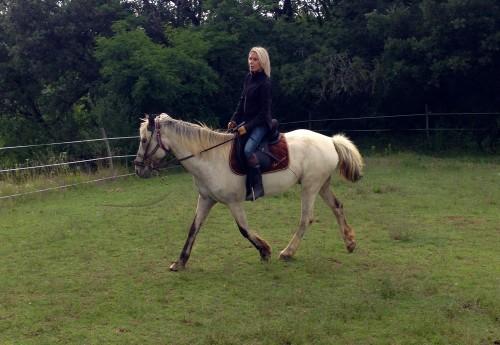 cheval,animal,pas,trot,postures,encolure,allongé,gemini,équitation,champ,verdure,amour,drôme