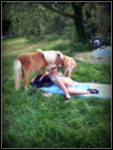 photo, animaux, poney, chien, nature, Les Chanaux, drôme