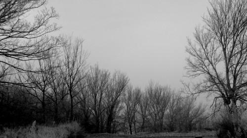 article, photo, froid, hiver, fin, année, littérature