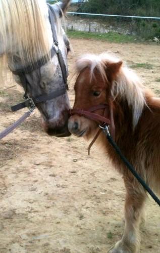 animaux,poney,cheval,chien,temps,livre