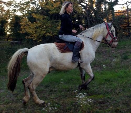 Photo, Valerie Bergmann, Gemini, cheval, amour, automne, nature, vie, fin hiver 2015