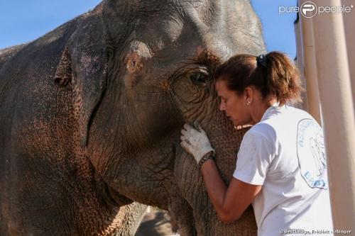 Animaux, princesse Stéphanie de Monaco, éléphantesqumour