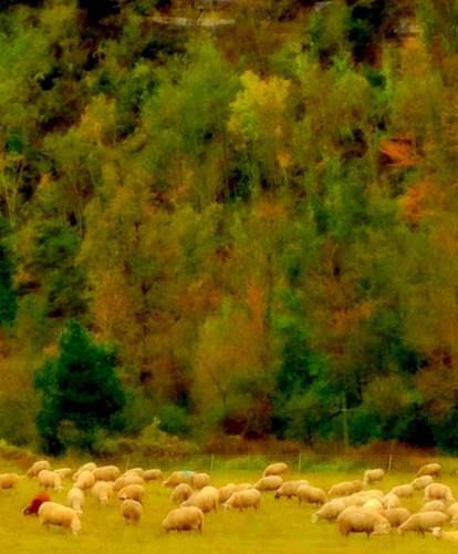 photos prose,drôme,bourdeaux,terre,moutons,troupeaux,faune,flore,paysage,vallon,montagne,prairies,lumière