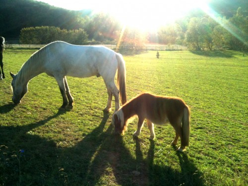 photo, bobine, poney, cheval, gemini, pré, soleil, joie