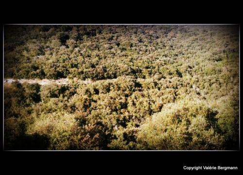 photo, nature, buisson, Saou, Drôme