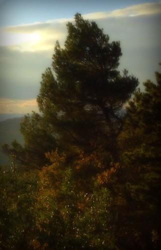 photos, art, Drôme, paysage, forêt, automne, arbres, ciel, pin, nuages, couleurs, lumières, feuilles
