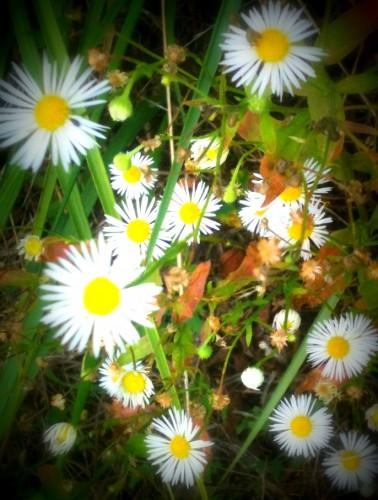 photo,nature, campagne, feuilles, baies, couleurs, branches, fleurs, couleurs, les chanaux, crest