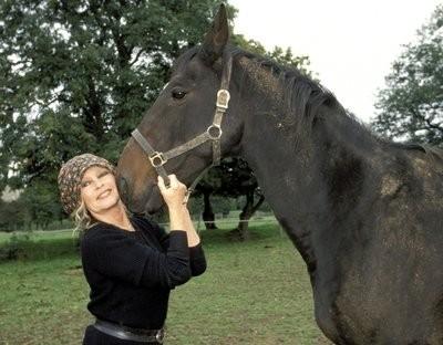cheval,bardot,mon combat,sans haine,dégoût